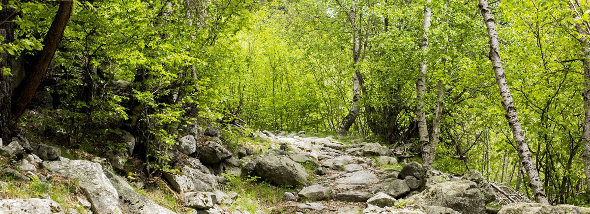 Activitats d'estiu a la vall del Madriu-Perafita-Claror