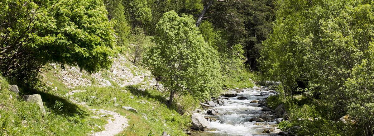 Coneix la natura amb els guies de muntanya